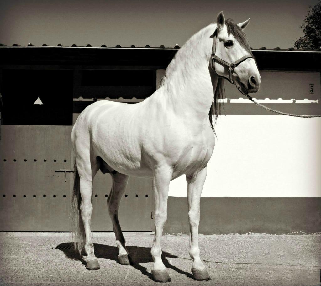 Gaucho V (1)