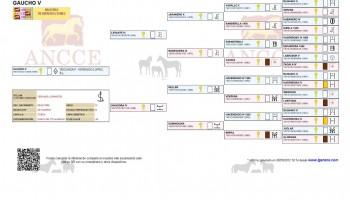 Gaucho V. Genealogía